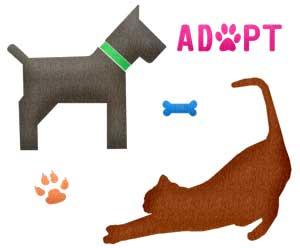adoptar animal